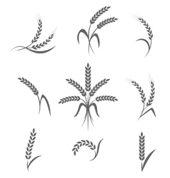 Wheat ears or rice icons set agricultural symbols vector