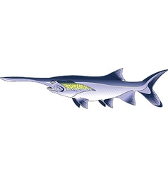 paddlefish cartoon vector image vector image