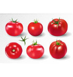 Tomato set pink salad tomato collection photo vector