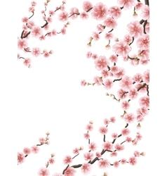 Cherry Blossoms Sakura flowers Background EPS 10 vector image