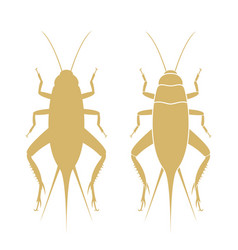 Field cricket isolated cricket on white vector