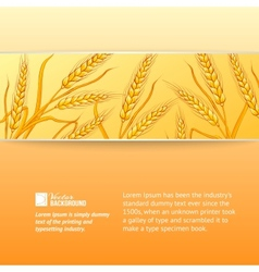 Rye ears on orange background vector