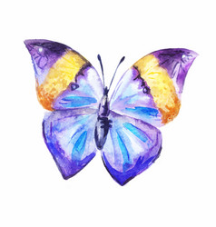 purple watercolor butterfly vector image vector image