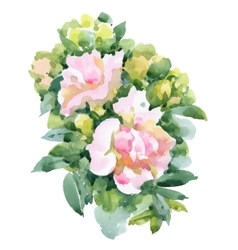 Watercolor garden roses isolated on white vector