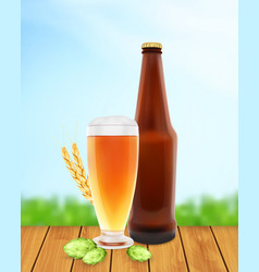 Beer glass with hop plant wheat and bottle vector