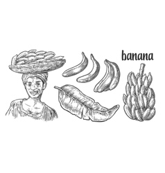 Two single and bunches of fresh banana with leaf vector image