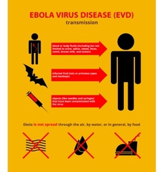 Ebola transmission infographic vector