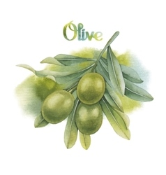 Watercolor green olive branch vector