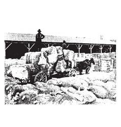 Cotton bales vintage vector