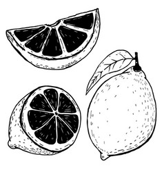 set of hand drawn lemons isolated on white vector image vector image