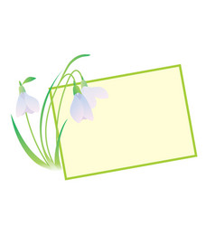 snowdrop flower frame vector image vector image
