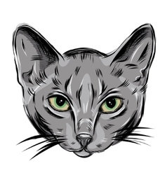 Portrait of domestic russian blue cat cute vector