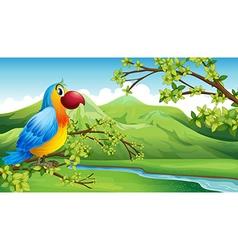 A colorful bird near the mountain vector image