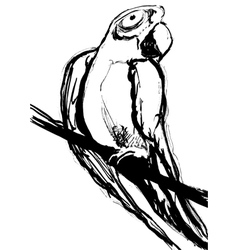 Parrot hand drawn sketch vector