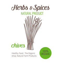 hand drawn chives vector image