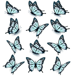 Collection of blue butterflies flying in different vector image