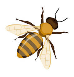 flying realistic honey bee close-up hand drawn vector image vector image