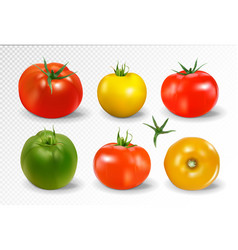 Realistic of 6 different colors of tomatoes vector