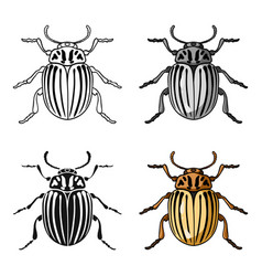Colorado beetle icon in cartoon style isolated on vector
