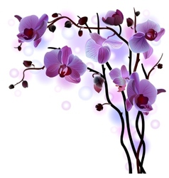Branch of violet orchids vector
