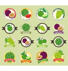 Set of various fresh fruit premium quality vector