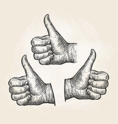 hand gesture thumbs up vintage sketch vector image