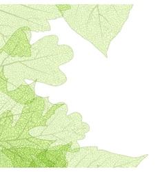 Leaf skeletons autumn tenplate eps 10 vector