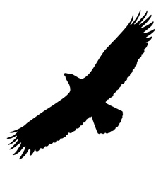 Eagle silhouette vector