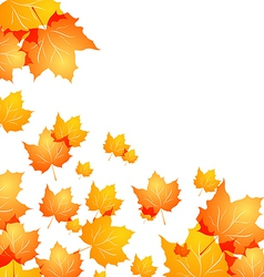 Autumn background with flying maples vector image