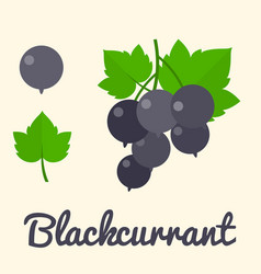Blackcurrant vector