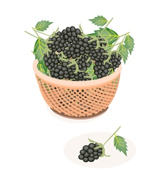 A brown basket of delicious fresh blackberries vector