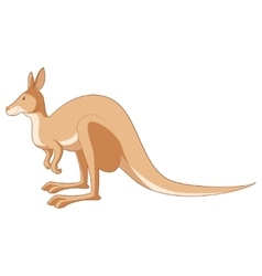 Cartoon smiling Kangaroo vector image