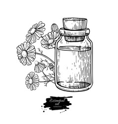 chamomile essential oil bottle and bunch of vector image
