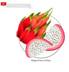 Dragon fruit a famous fruit in vietnam vector