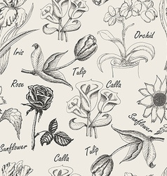 Hand drawing seamless patern of flowers iris calla vector