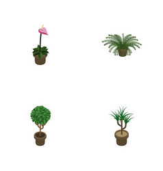 Isometric houseplant set of tree grower vector