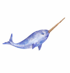 Narwhal watercolor vector