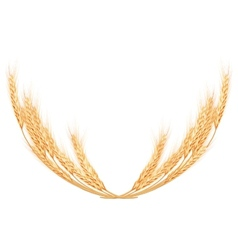 Wheat spikes on white template eps 10 vector
