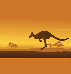 Kangaroo beauty scenery in the hill vector