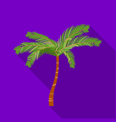 Mexican fan palm icon in flat style isolated on vector