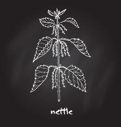 Nettle medicinal plant vector