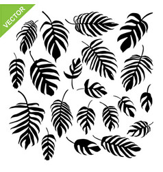 monstera leaves silhouettes vector image