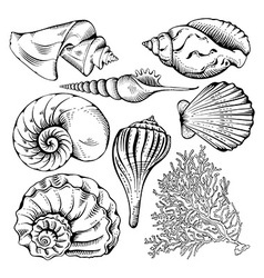 Shell set vector
