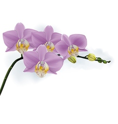 Orchid branch with buds vector