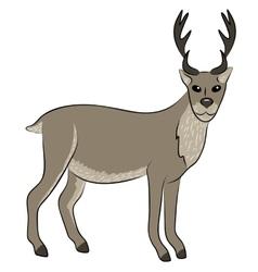 Young wild deer vector