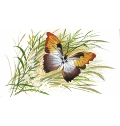Colorful watercolor pattern with butterfly and vector image