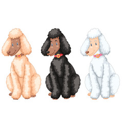 three poodle dogs with different fur colors vector image vector image