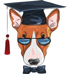 Funny graduated dog bullterrier vector