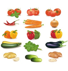 Biggroup of vegetables vector