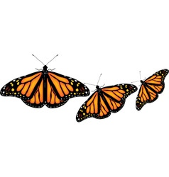 Colorful butterflies on white background vector